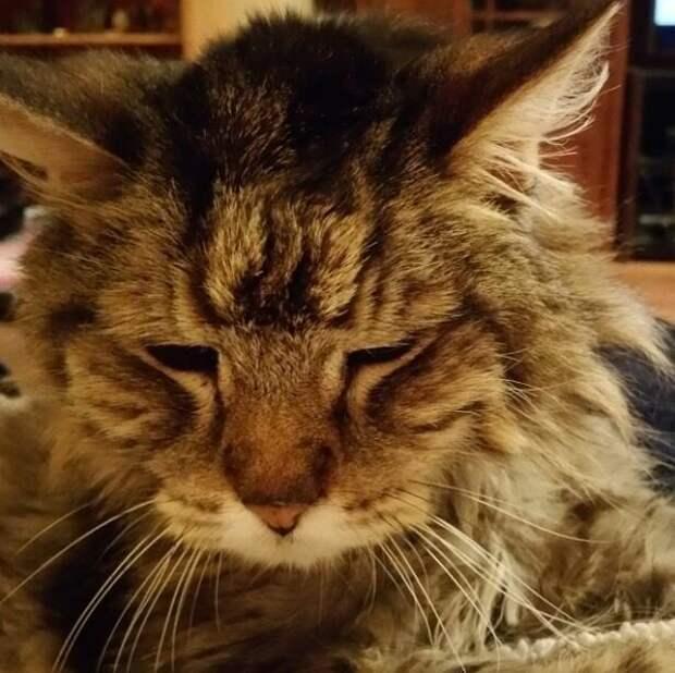 15. Гладят кота против шерсти и смеются от того, как смешно он теперь выглядит домашний питомец, животные, кот, кошка, привычки, прикол, юмор