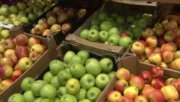 Польша: если Россия снова купит наши яблоки, мы перестанем ее бояться