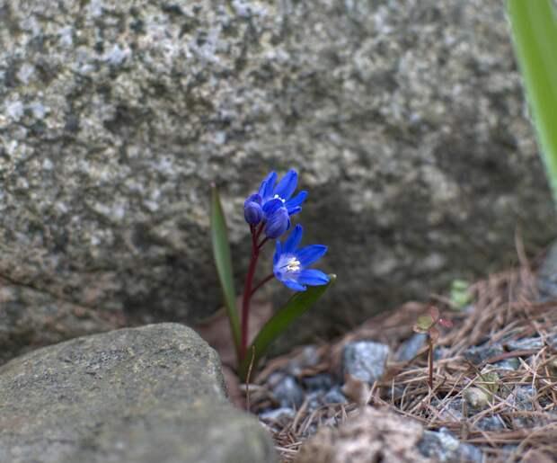 Весна идёт, весне дорогу