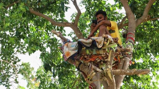 Житель Индии прожил 11 дней на дереве, чтобы не заразить семью коронавирусом