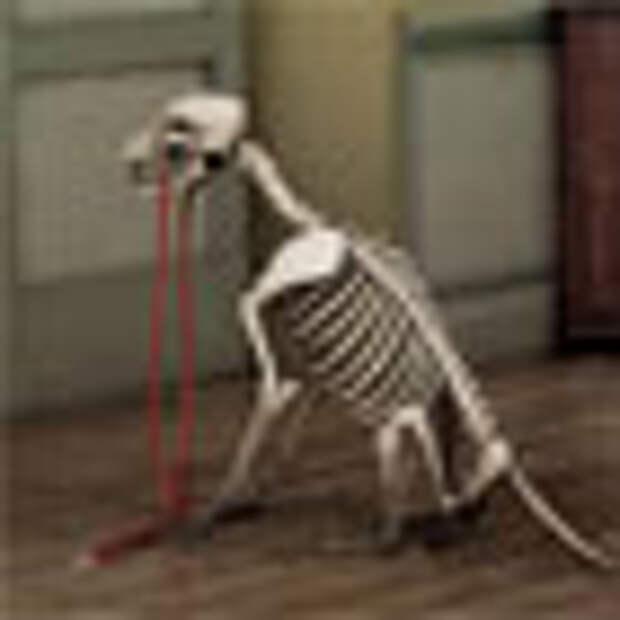Фильмы с доставкой на дом смертельно опасны для собак