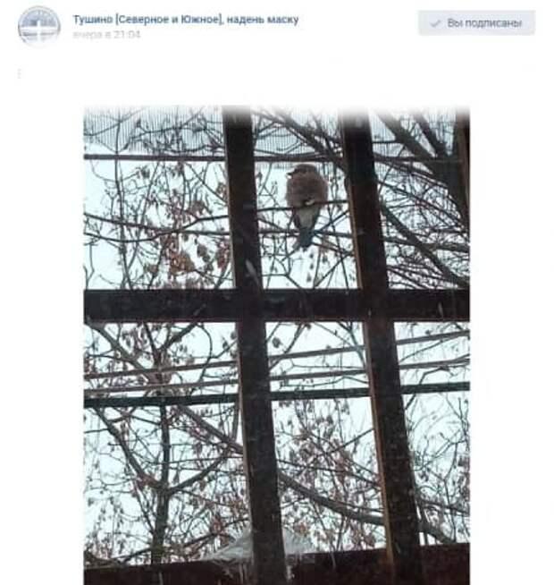 Сияющая птица прилетела в Северное Тушино