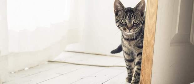 8 способов заработка на коте