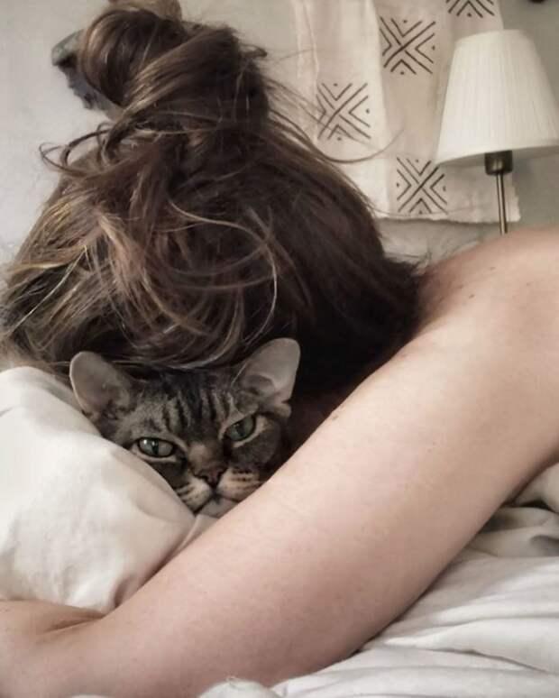 Кошка Барбара очаровала соцсети своей искренней, неприкрытой яростью и деспотизмом