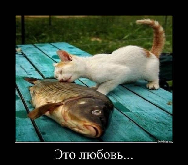 5672049_1619765643_demotivatory1 (640x563, 84Kb)