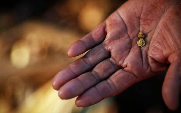 Реки России, в которых можно намыть золото
