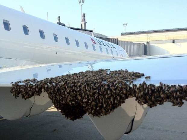 Пчелы помешали взлететь самолету во Внуково (ВИДЕО ЖЕСТЬ!)