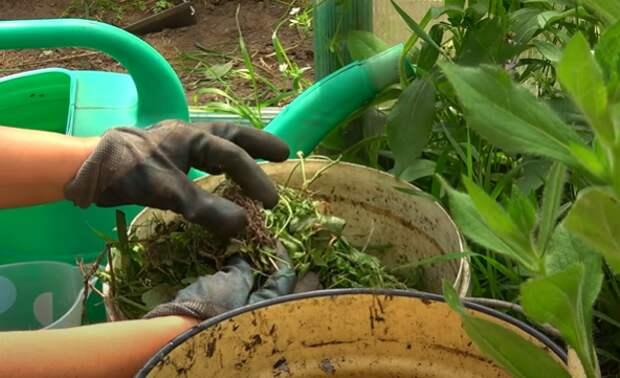 Лучшее натуральное удобрение в мире своими руками, заменит все остальные подкормки. Как я его готовлю.