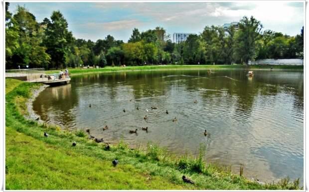 Фото дня: утки «отдыхают» на Торфянке