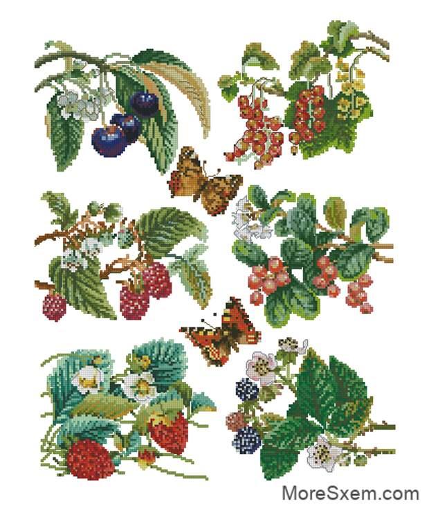 Ветки с ягодами