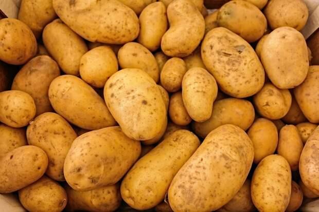 Более 3 тыс тонн картофеля экспортировали из Удмуртии с начала года