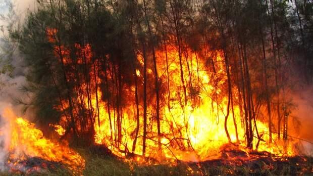 Авиалесоохрана заявила о стремительном увеличении площади лесных пожаров в РФ