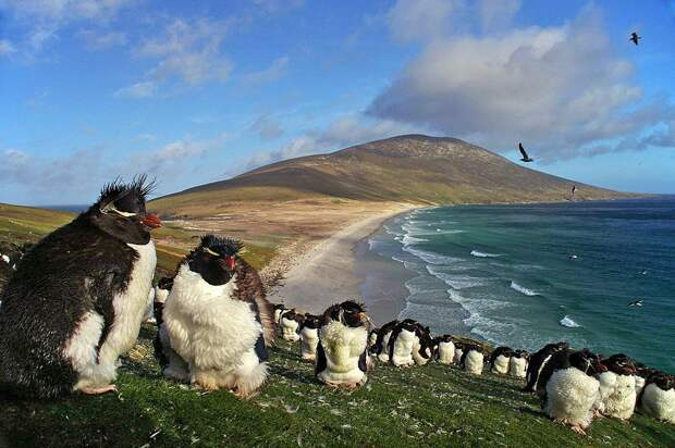 Пингвины на минных полях: опыт Великобритании