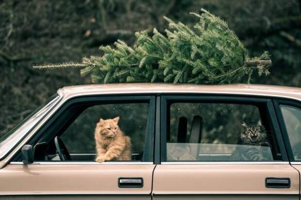 Как лучше и выгоднее перевозить котиков?