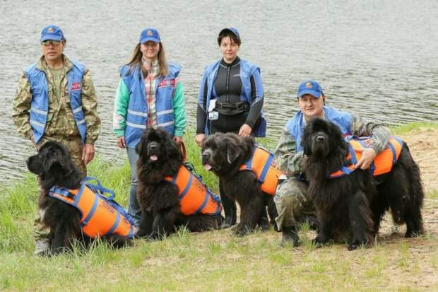 Собаки-спасатели/ stroginskievesti.ru