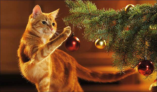 Коты и елки созданы друг для друга