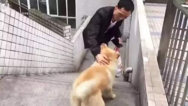 Пес каждый день провожал хозяина до работы и уходил по своим делам