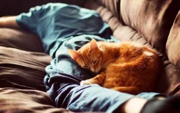 Как разговаривать с котами и кошками? Ученые нашли ответ (4 фото)