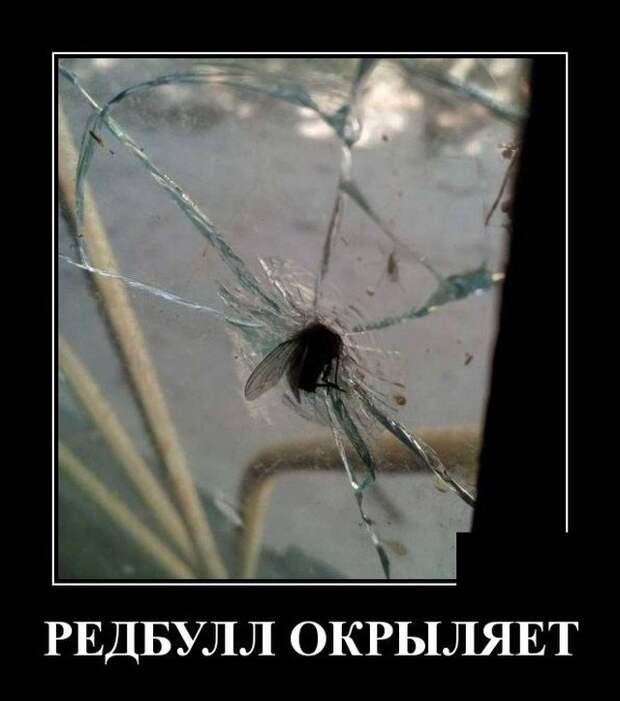 Демотиватор про муху