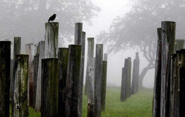 Птица на столбе