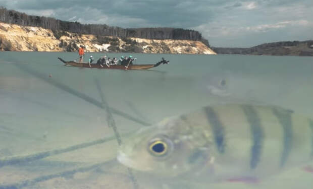 Спускаем рыбам в воду валерьянку: смотрим на видео реакцию под водой