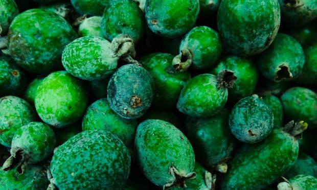 Фейхоа: самый полезный фрукт октября