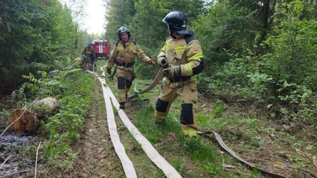 Крупный лесной пожар в Удмуртии полностью локализован