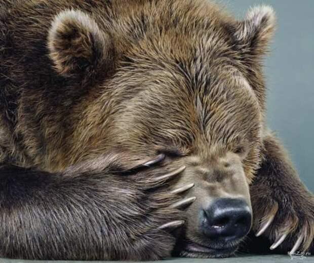 Ещё одна неделя зря и впустую: некоторые факты о «гибнущей» России