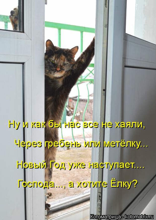kotomatritsa_B (496x700, 304Kb)