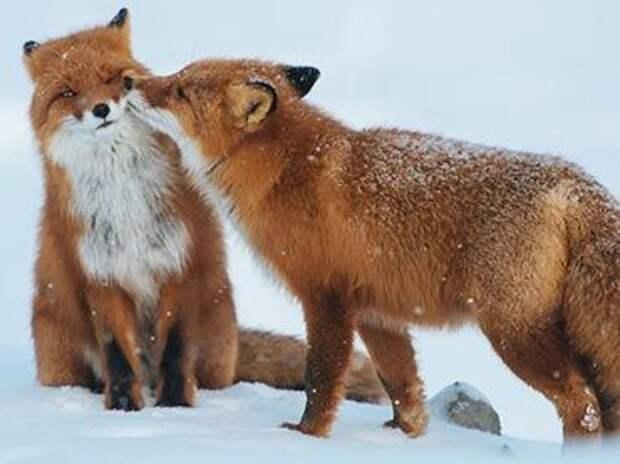 животные неловкие ситуации в любви, животные неловкие любовные ситуации