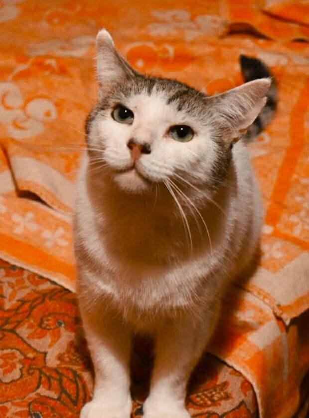 Заметьте! Откликнитесь! На улице замерзает совершенно здоровый, но такой замученный жизнью кот...
