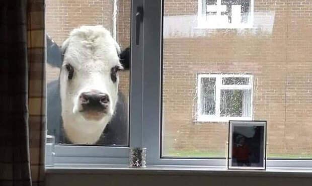 Люди делятся криповыми снимками своих животных и вот 11 самых жутких из них