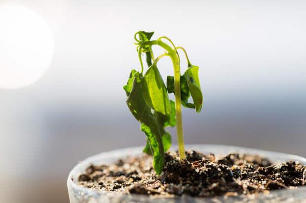 Как оценить здоровье растений по форме и цвету листьев