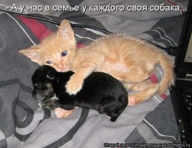 1305242876_kotomatritsa-11