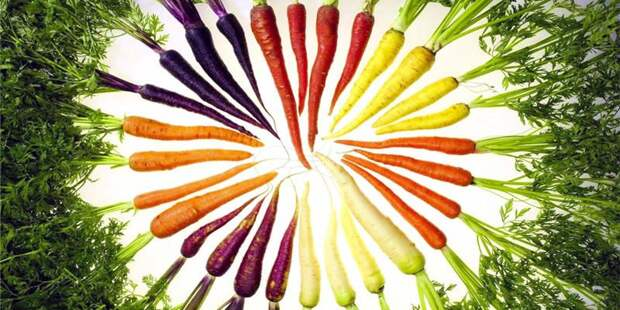 http://best5.it/b5/wp-content/uploads/2013/12/Vitamine-e-cancro-Betacarotene-2-800x400.jpg