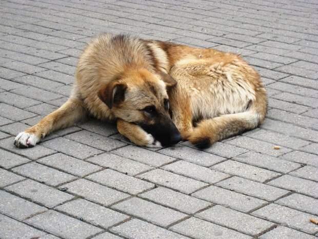 Возрастных бездомных животных будут оставлять в ижевском приюте на постоянной основе