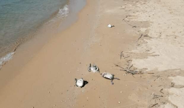 Более десятка мертвых уток нашли на берегу Цимлянского водохранилища