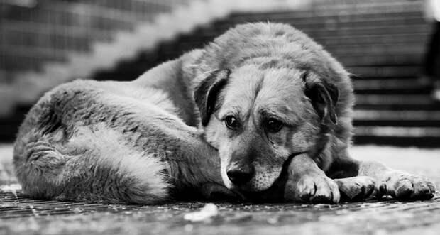 Как умирают собаки.