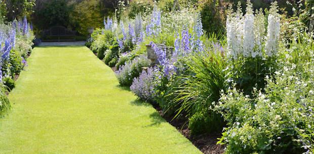 Безупречный зеленый газон с растениями
