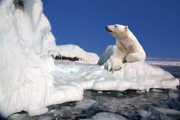 Знакомьтесь: Северный полюс. 20 фактов о крае света