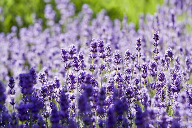 Самые полезные лекарственные растения для дачи