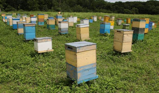 Приморский краевой закон опчеловодстве изменят всоответствии сфедеральными нормами