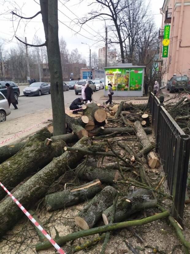 У станции метро «Удельная» вырубили деревья