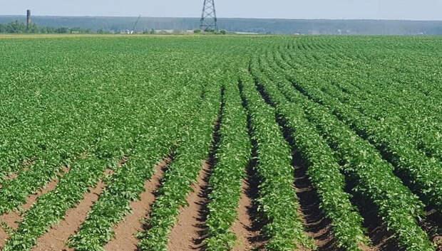 В Подмосковье в 2020 году под яровой сев планируют отвести более 220 тыс гектаров