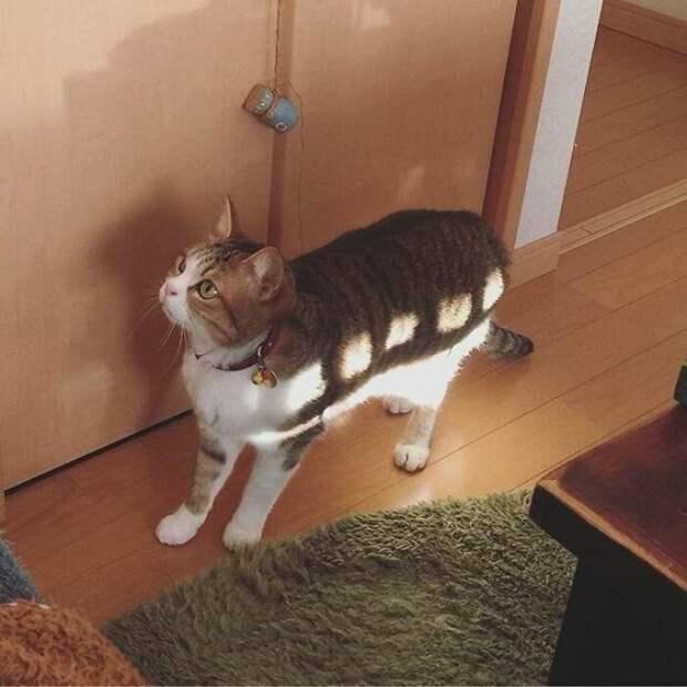 Котобус в действии животные, коты, смешные картинки, юмор