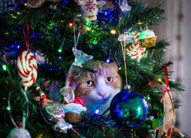 Может не надо? животные, не любят, новый год, планы, смешные, фото
