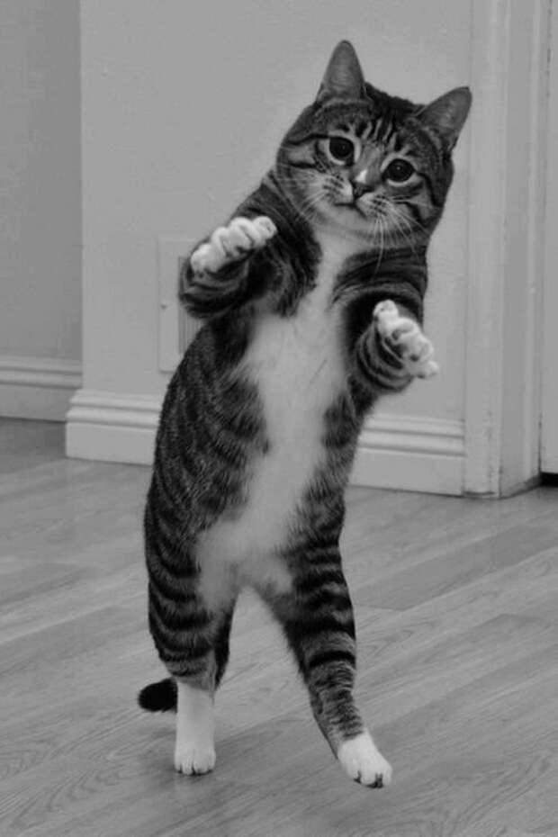 Записки ветеринара. Пара случаев, когда хозяева смеялись, а я хотела забрать кота