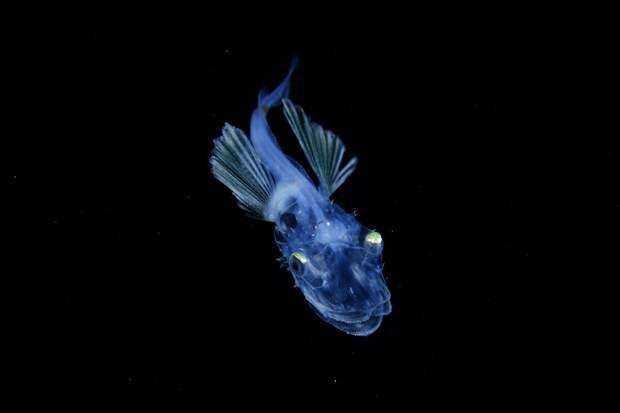 Ночная жизнь морских обитателей - такого вы еще не видели