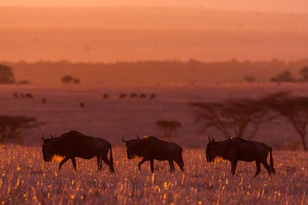 afrikanskie zakaty 11 Потрясающие африканские закаты от Пола Гольдштейна