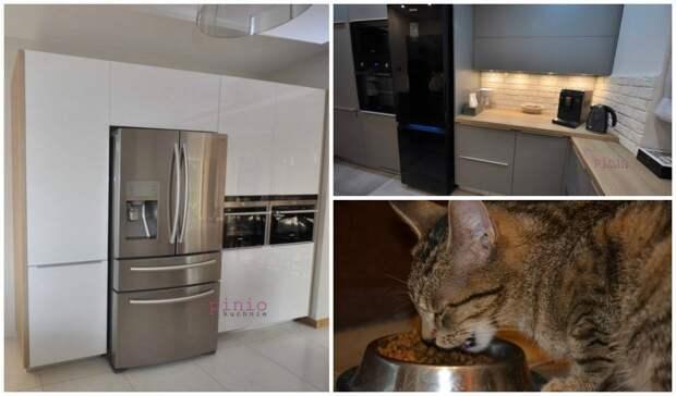 Домашние животные на кухне